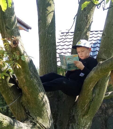 chłopiec siedzący na drzewie trzyma książkę w rękach